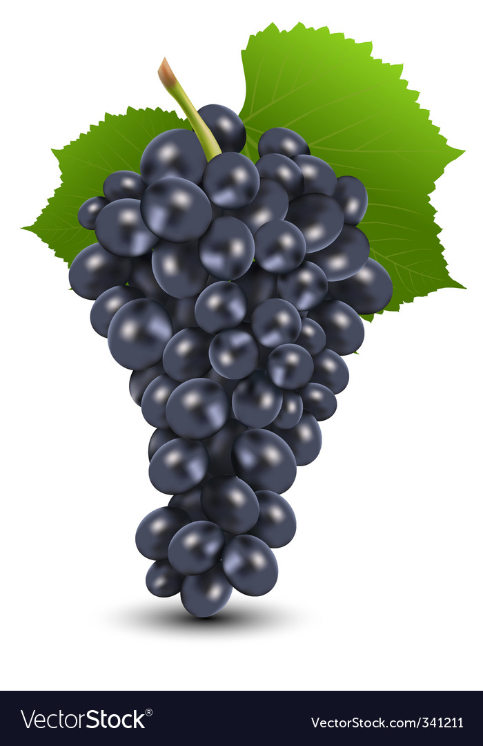 Bunch Of Grapes Royalty Free Vector Image Vectorstock