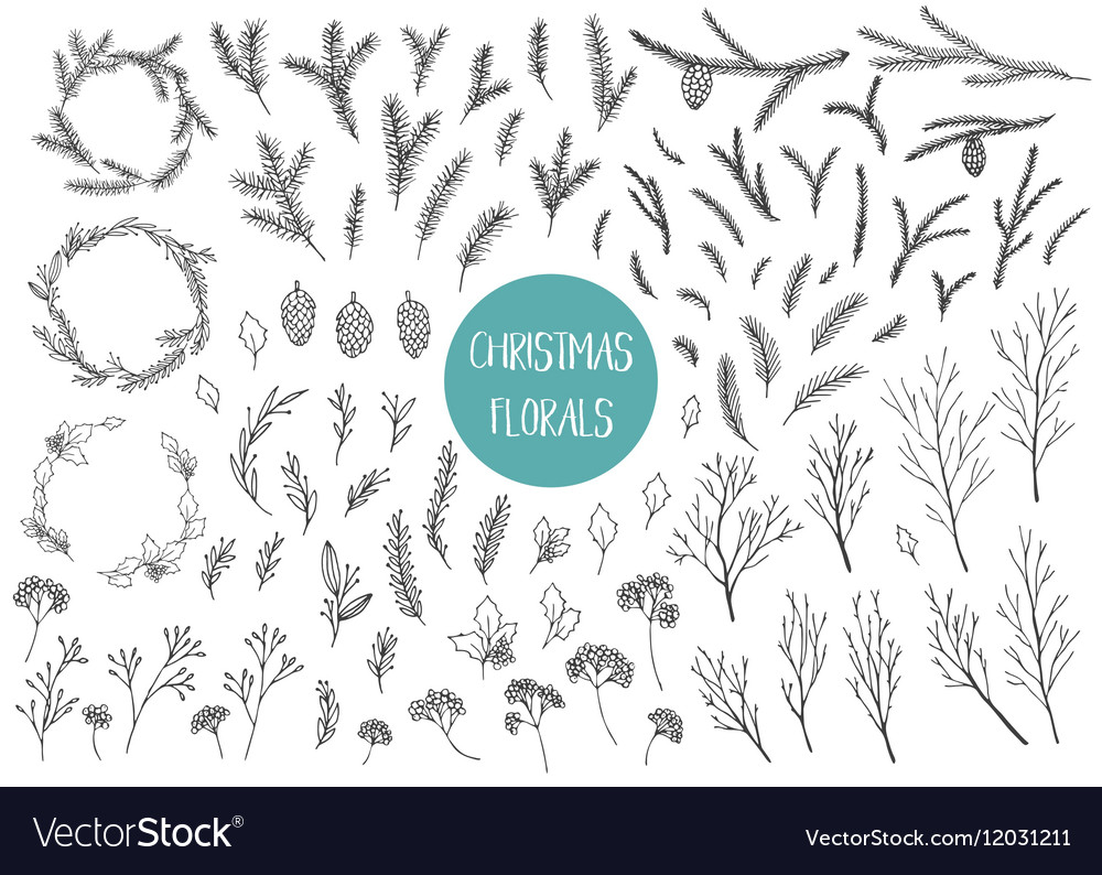 Chrismtas branches and plants
