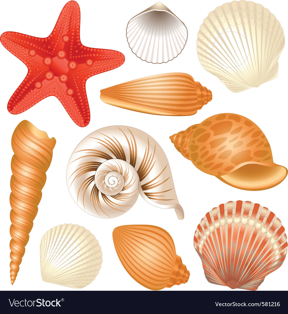 seashells collection royalty free vector image