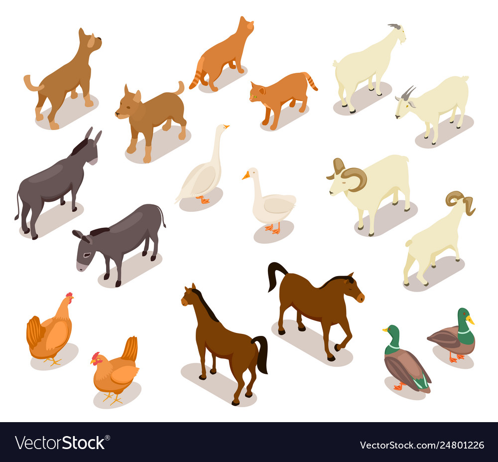 Farm animals isometric horse and dog cat and