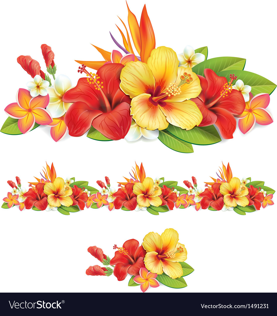 Garland of tropical flowers royalty free vector image - Hibiscus images download ...