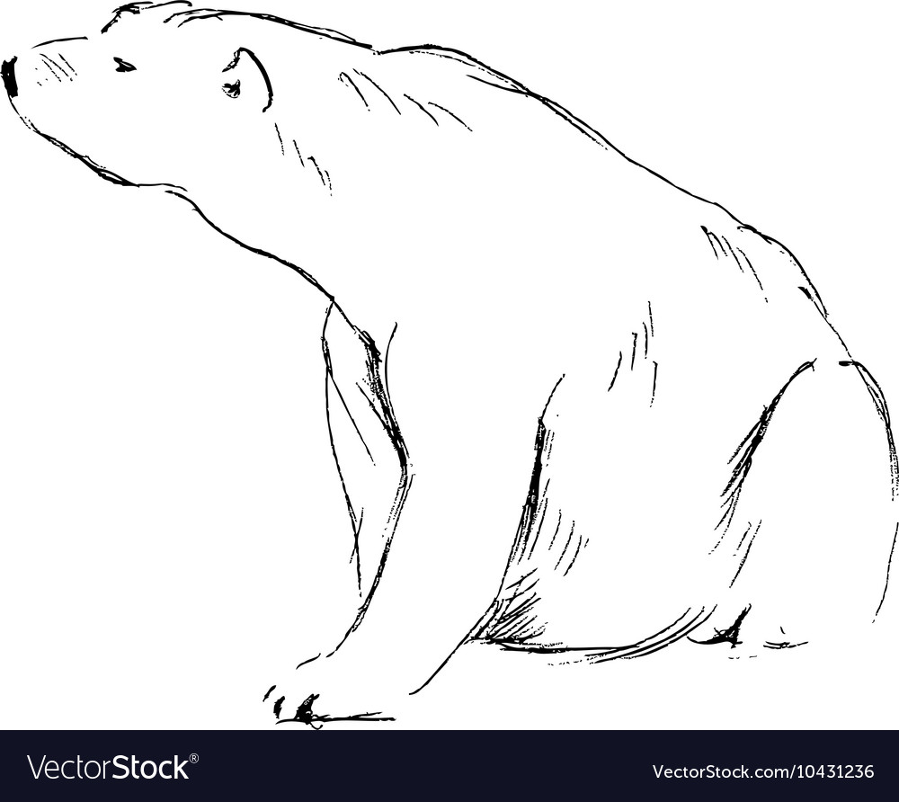 Hand Sketch Sitting Polar Bear