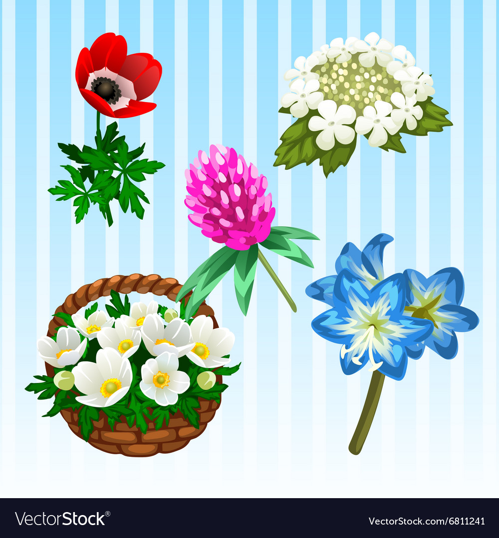 Five different flower types single and bouquet Vector Image
