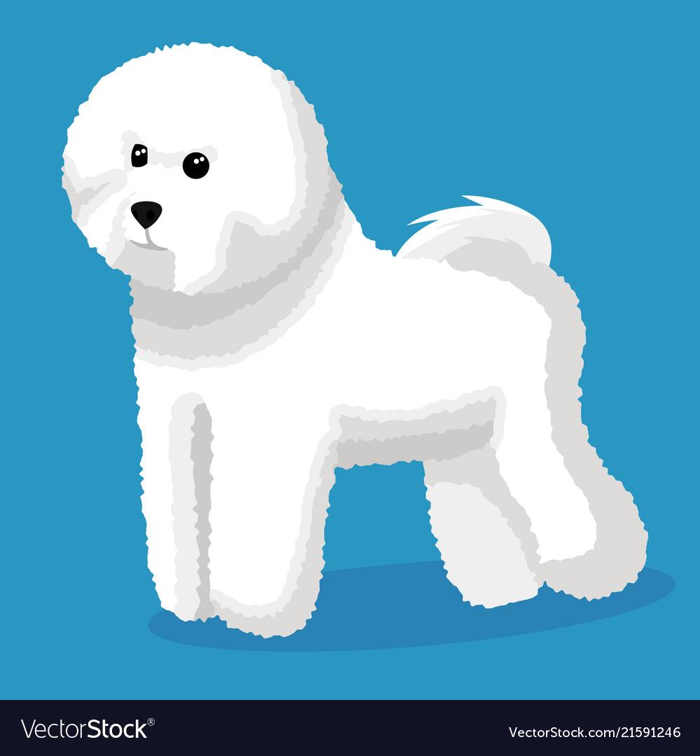 bichon frise dog royalty free vector image vectorstock