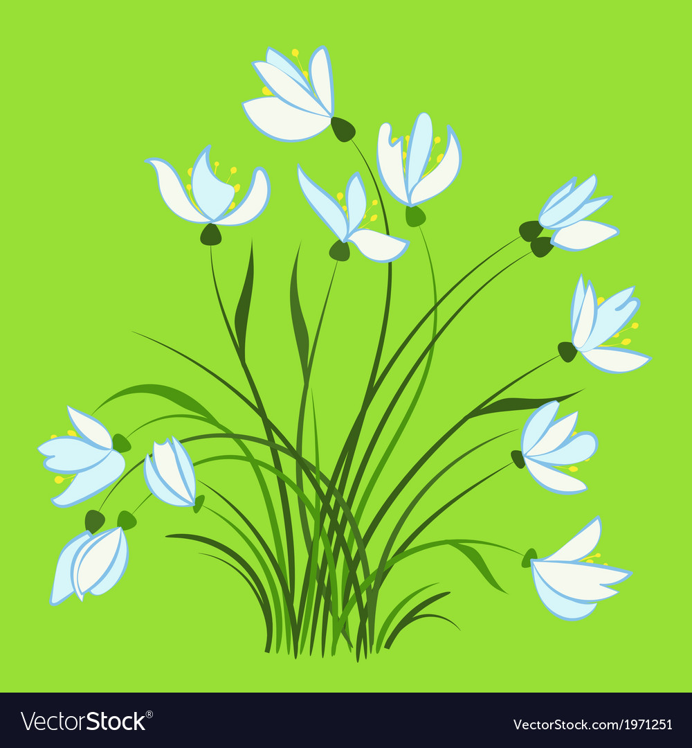 First spring flowers snowdrops royalty free vector image first spring flowers snowdrops vector image mightylinksfo