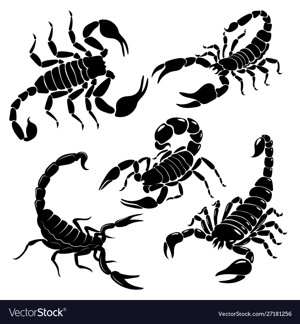 Scorpion set a collection black and white