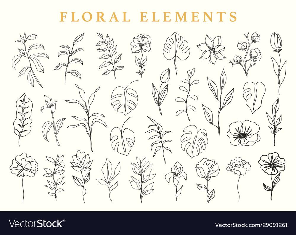 Floral elements set botanical drawings