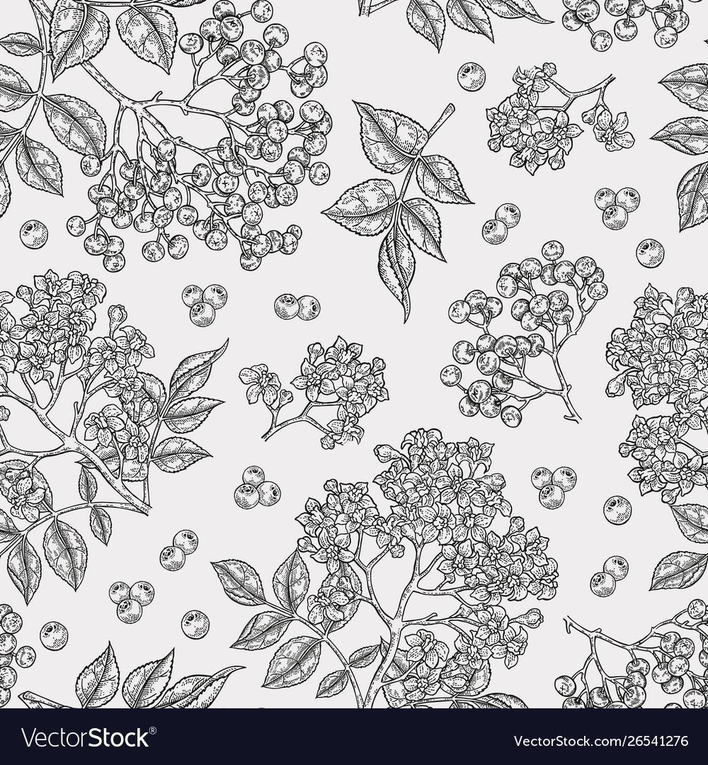 Elderberry and elderflower seamless pattern hand