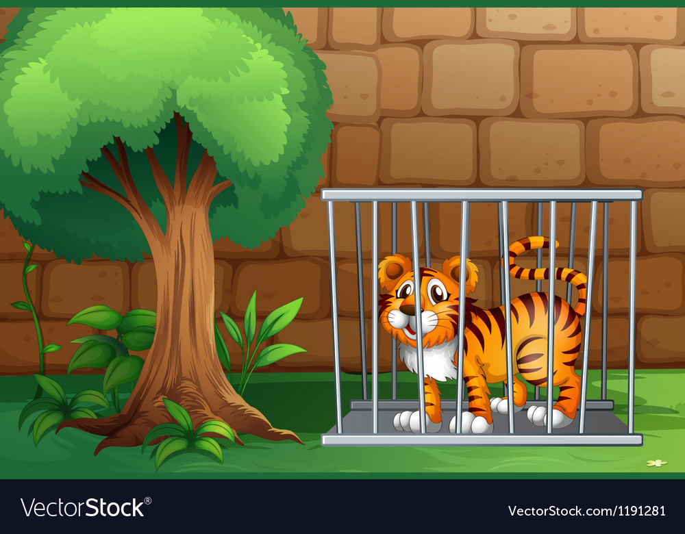 A tiger inside a steel cage