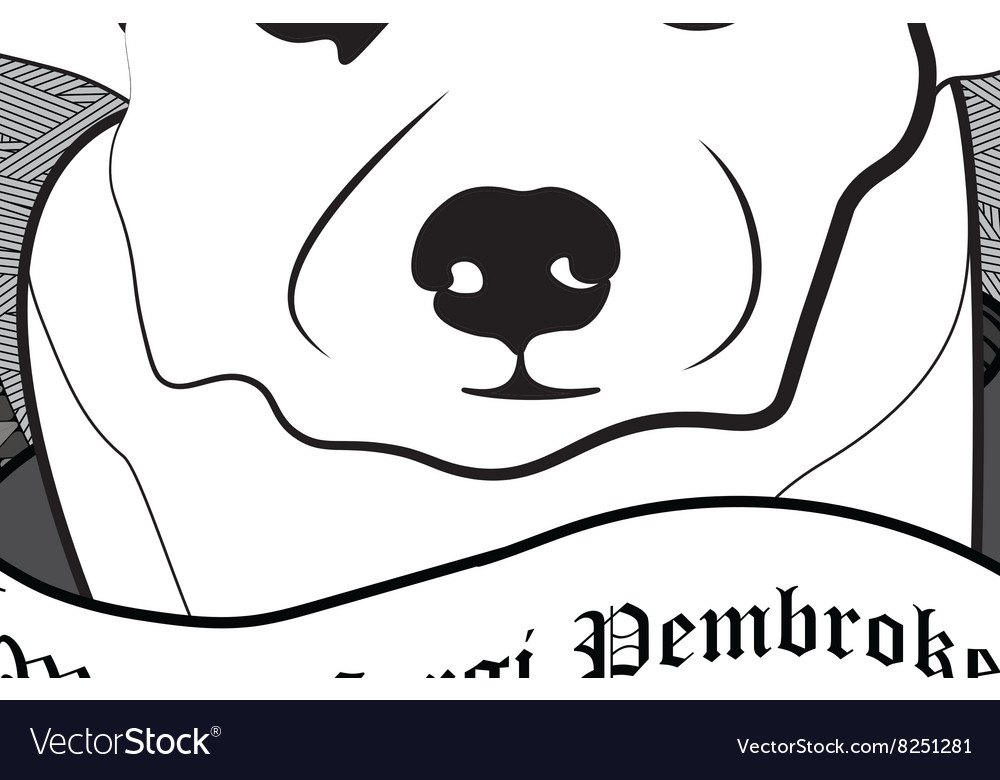 Welsh corgi pembroke Portrait Isolated dog vector image