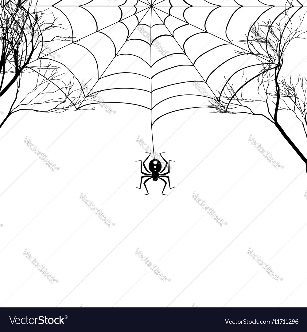 Cobweb between tree branches and a small spider on