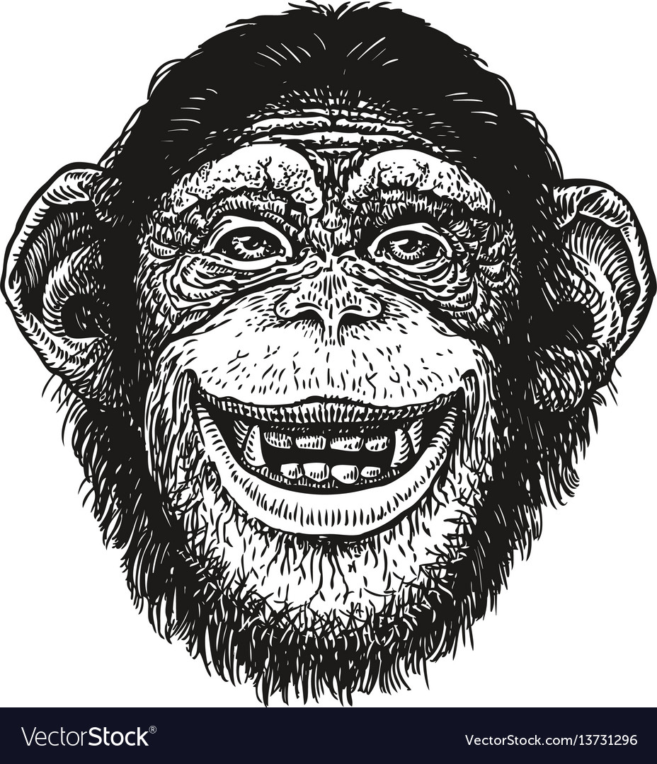 Hand drawn portrait of chimpanzee funny monkey vector image