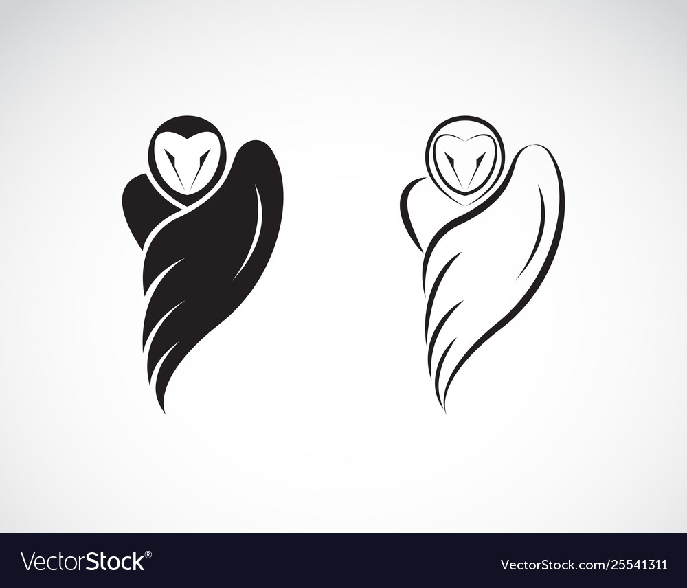 Owl design on a white background wild animals
