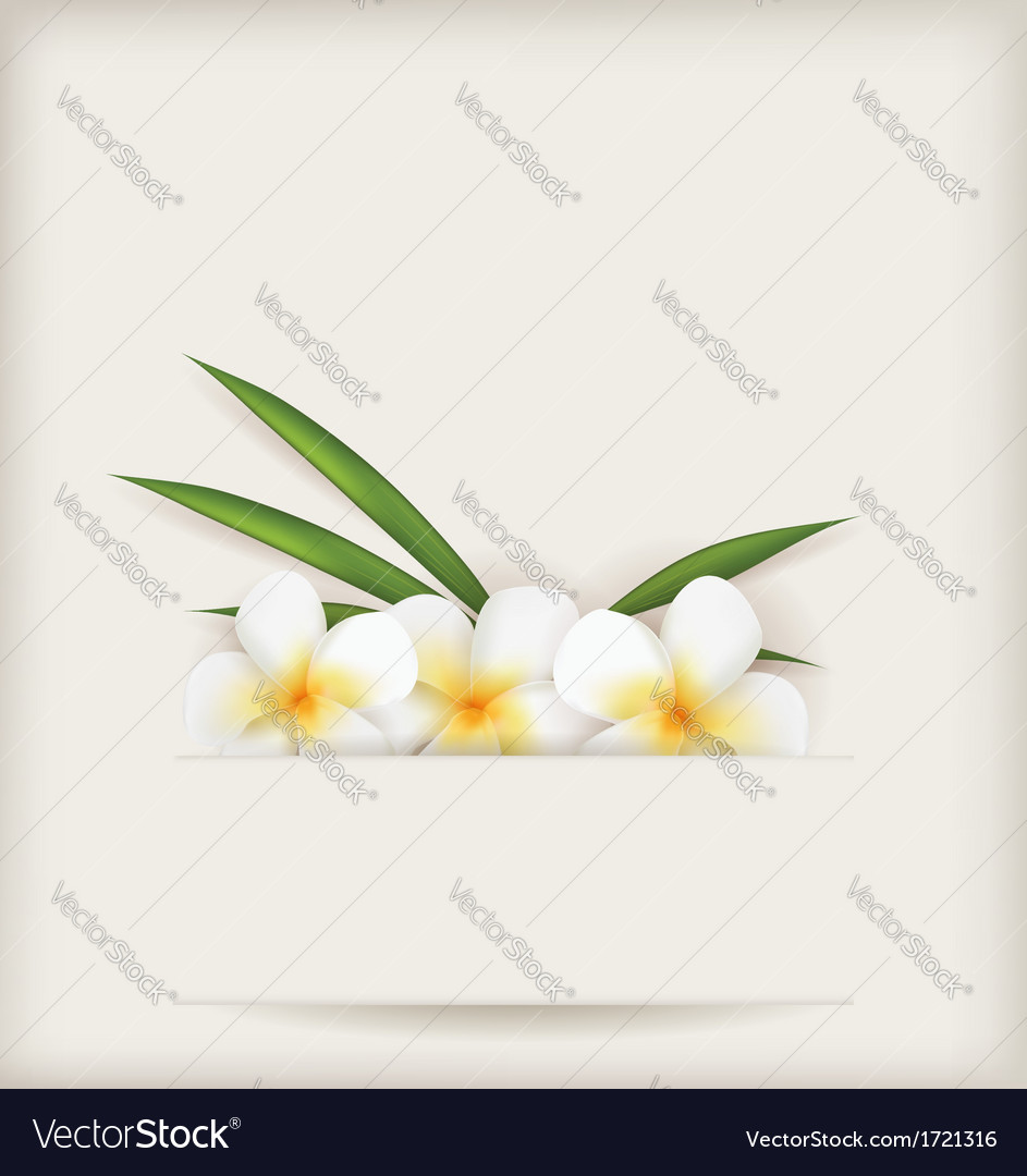 Plumeria background