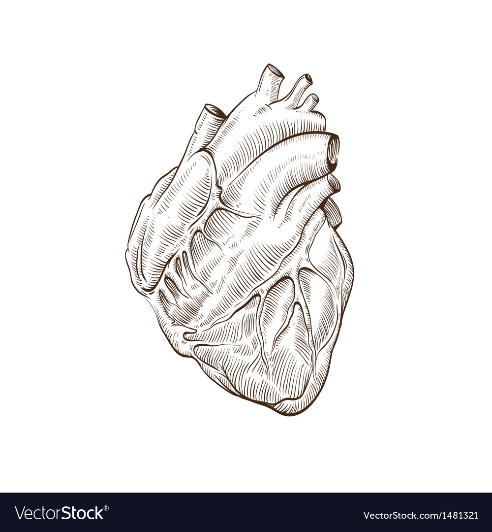 Heart isolated on a white backgrounds vector image
