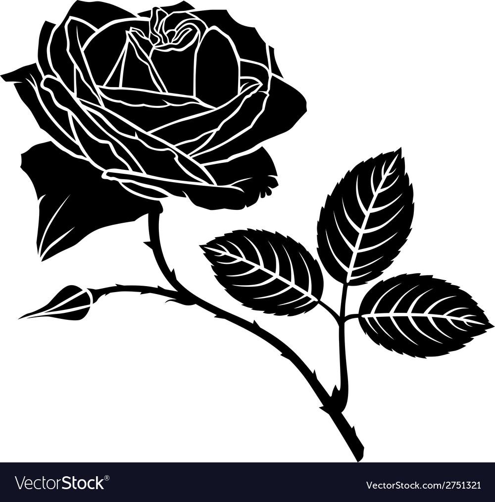 Rose bud vector image