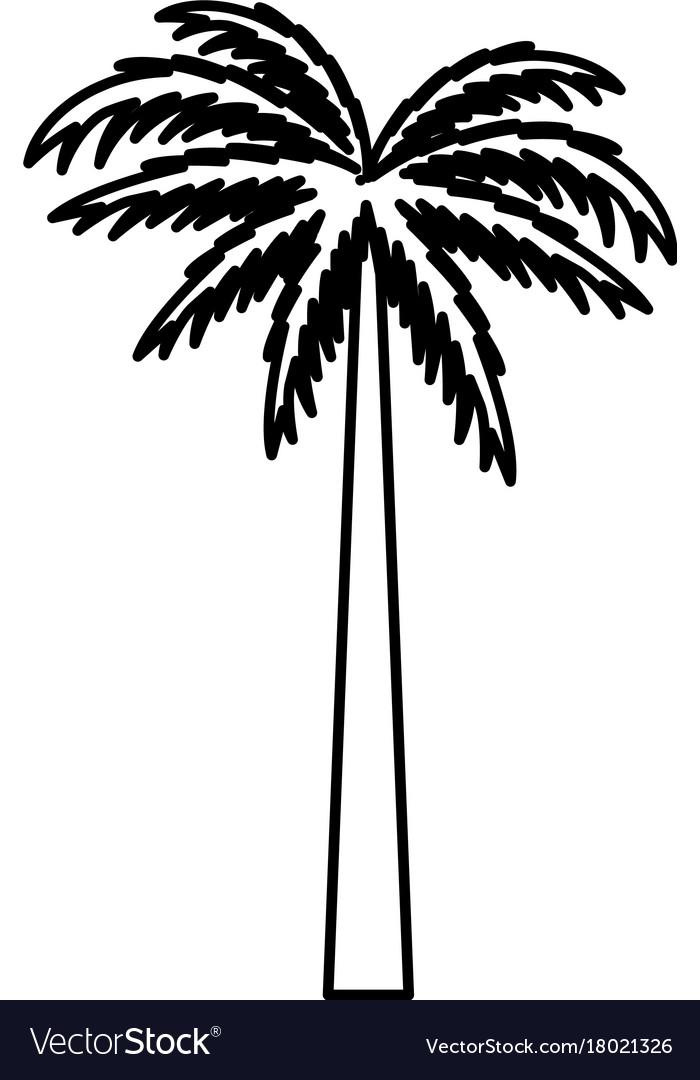 Tree Palm Symbol Royalty Free Vector Image Vectorstock