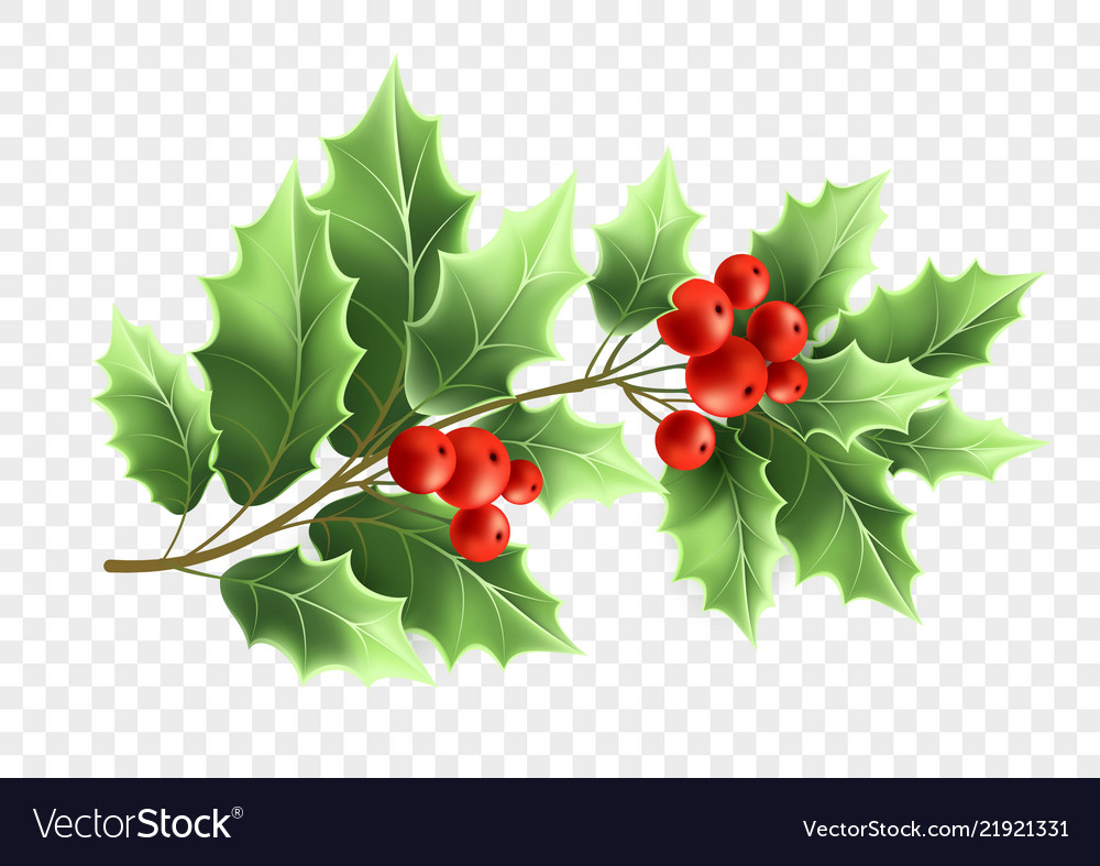 Christmas Holly Tree.Christmas Holly Tree Branch Realistic