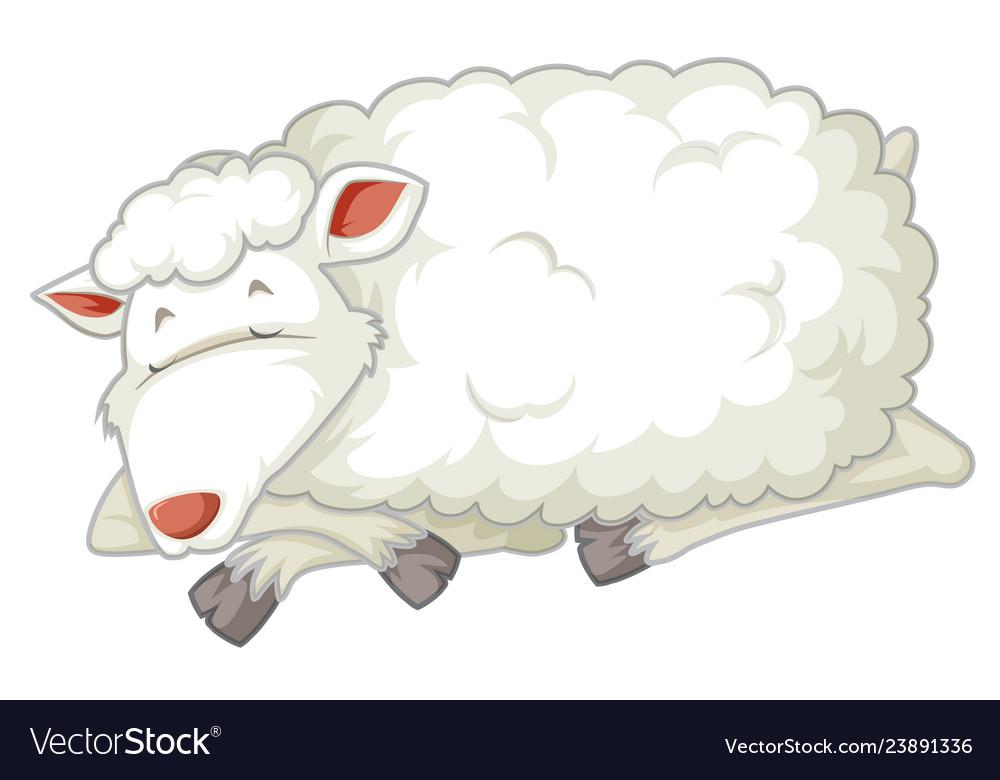 Sheep sleeping. An isolated