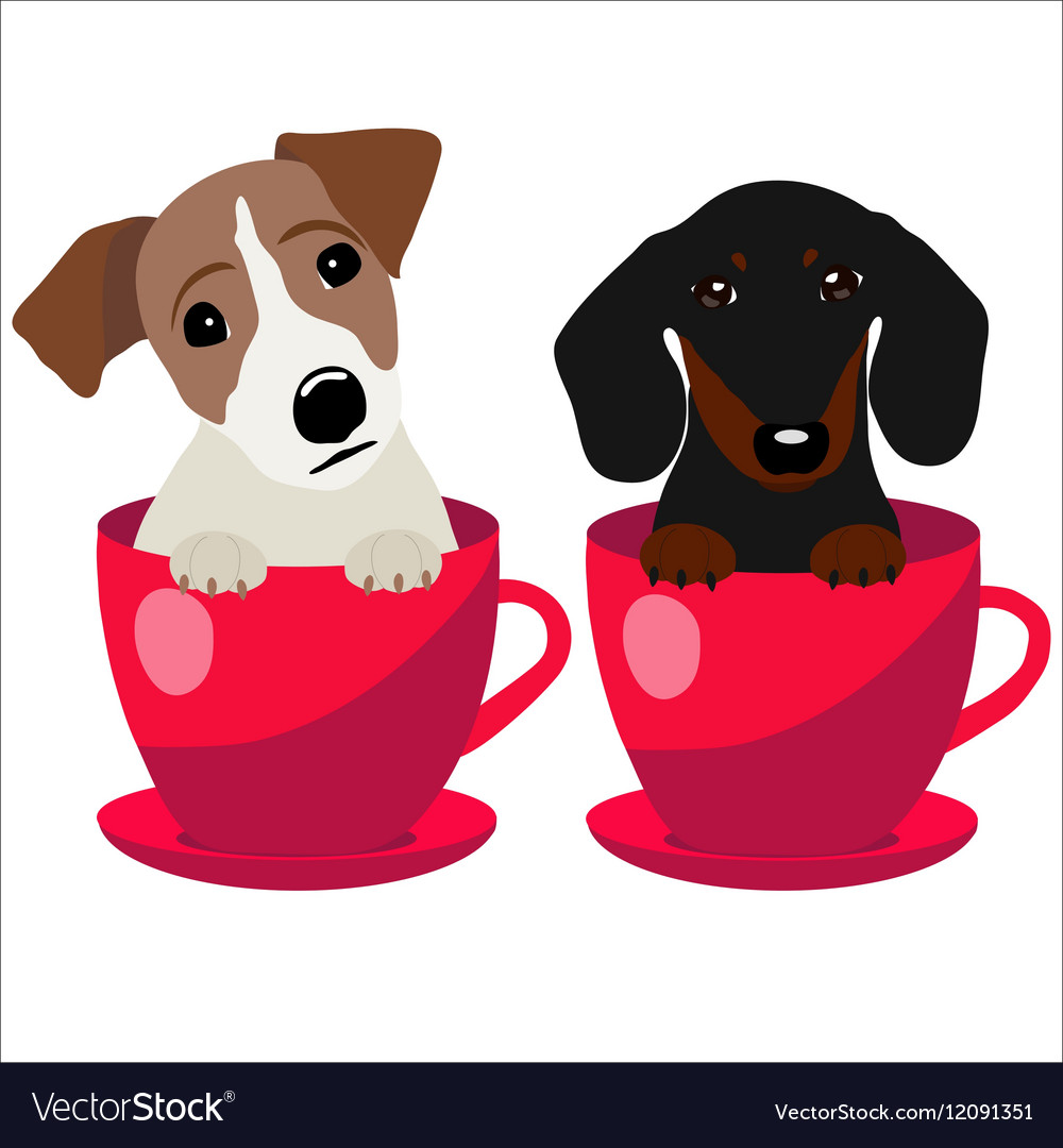 Jack Russell Terrier and Dachshund dog in red