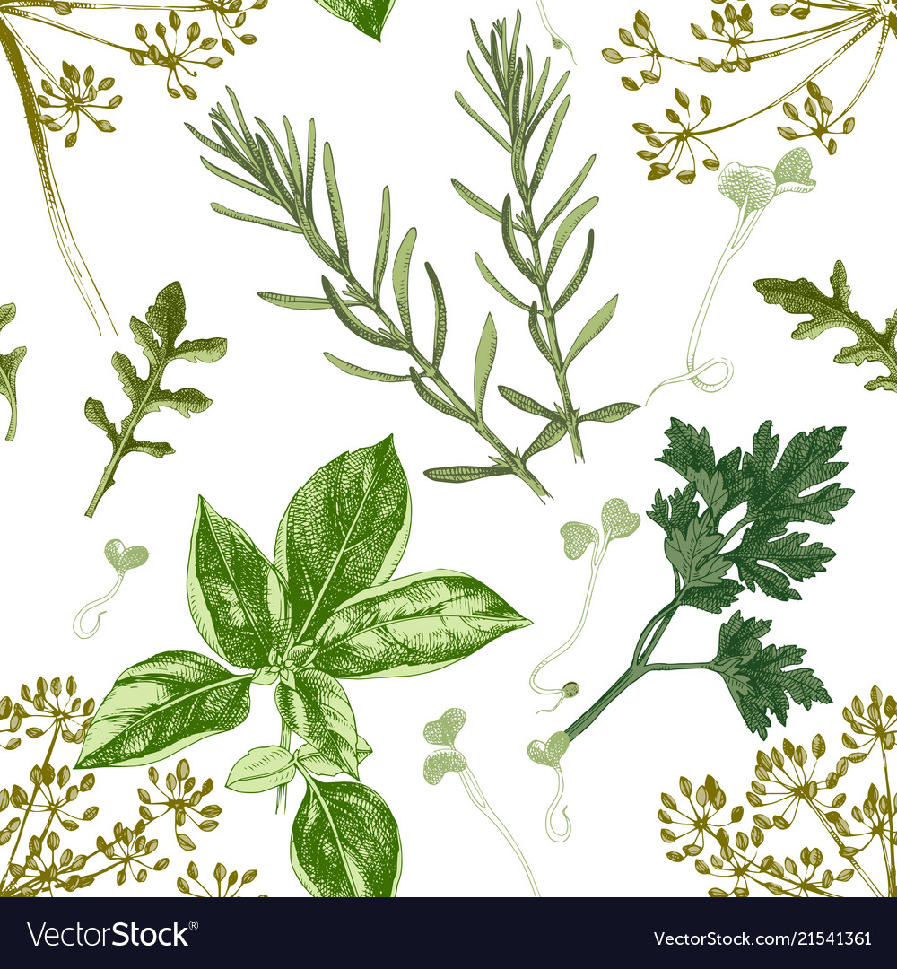 Seamless pattern with hand drawn herbs