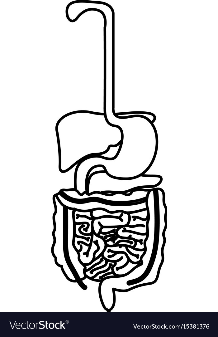 Sketch Silhouette Human Digestive System Vector Image
