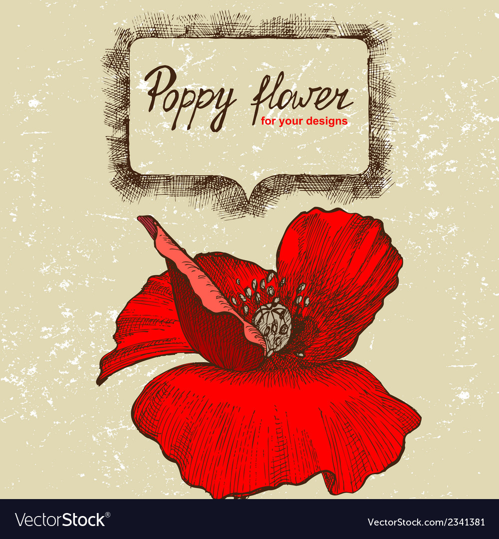 Background with hand drawn poppy flower