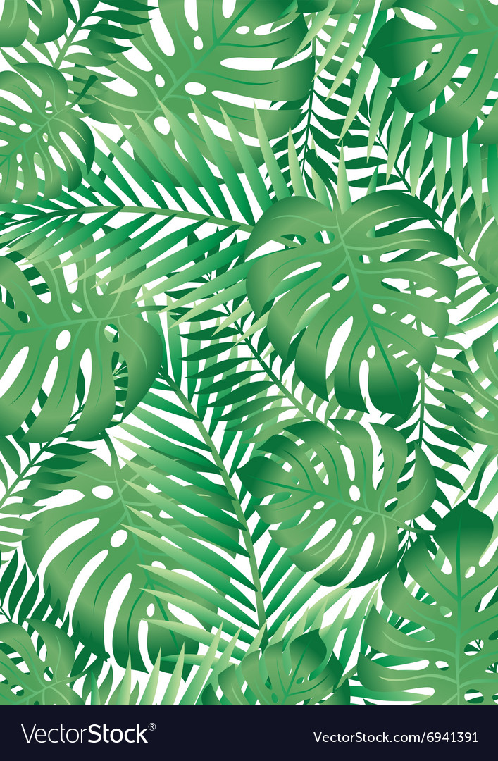 Green Tropical Palm Tree Leaves Background Vector Image