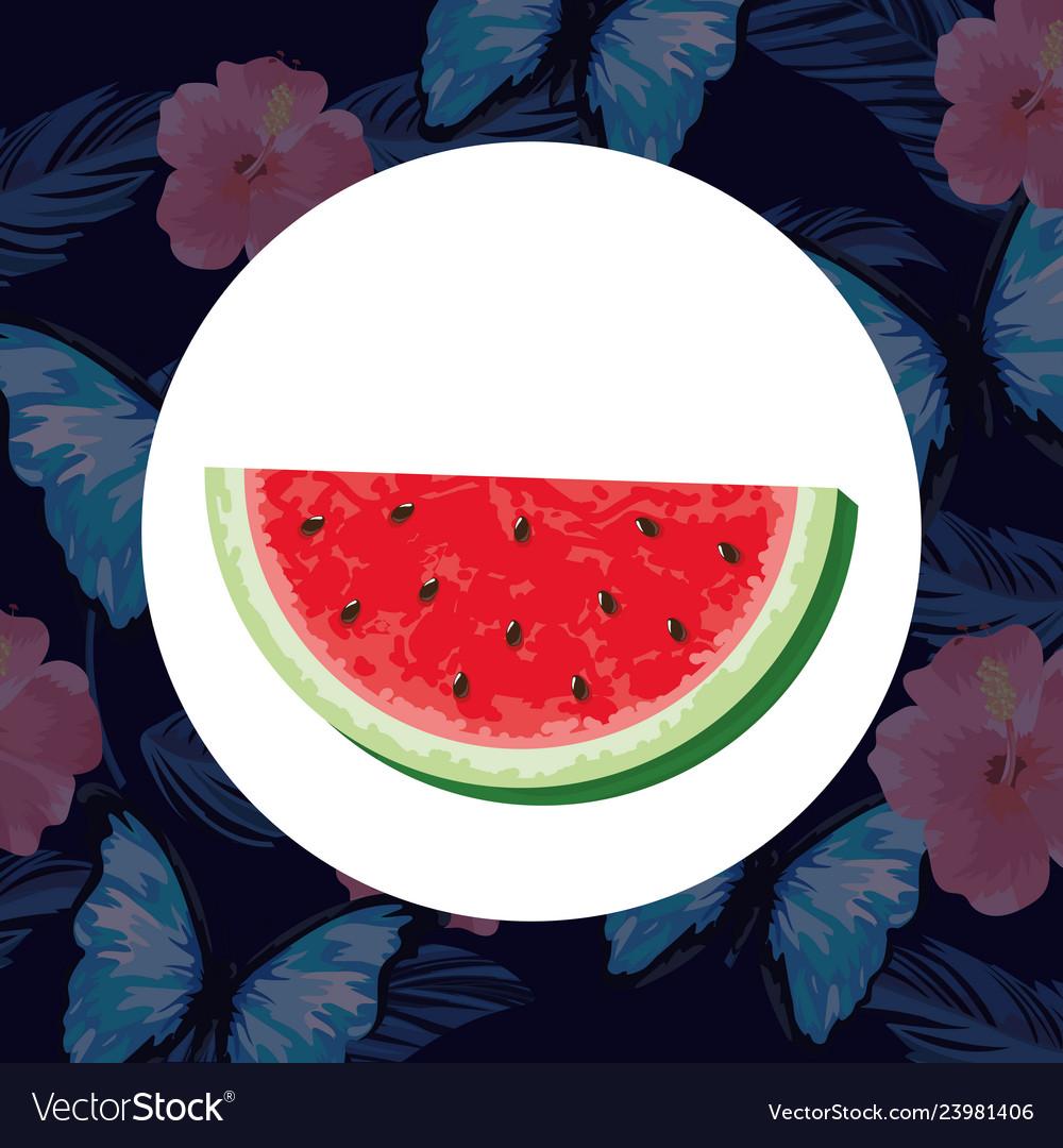Tropical watermelon carton