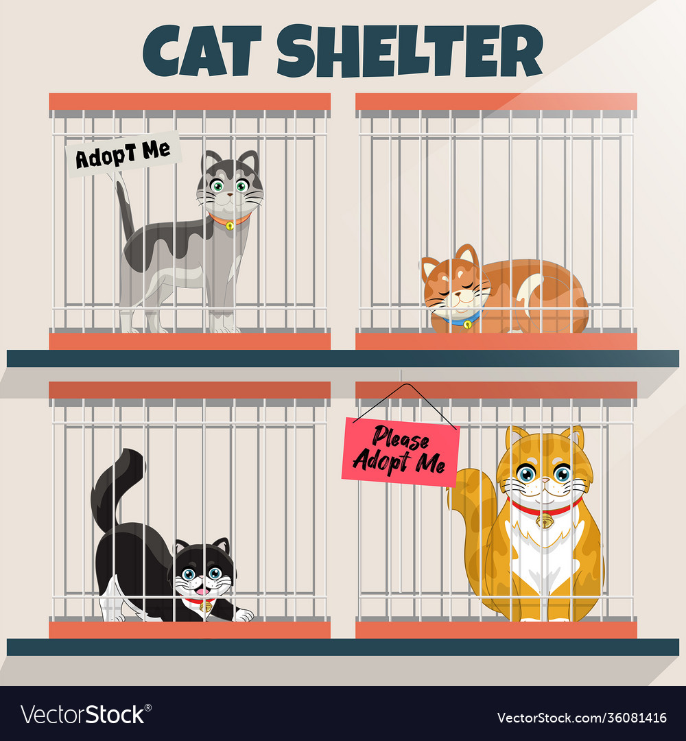 Cats in cage in cat shelter