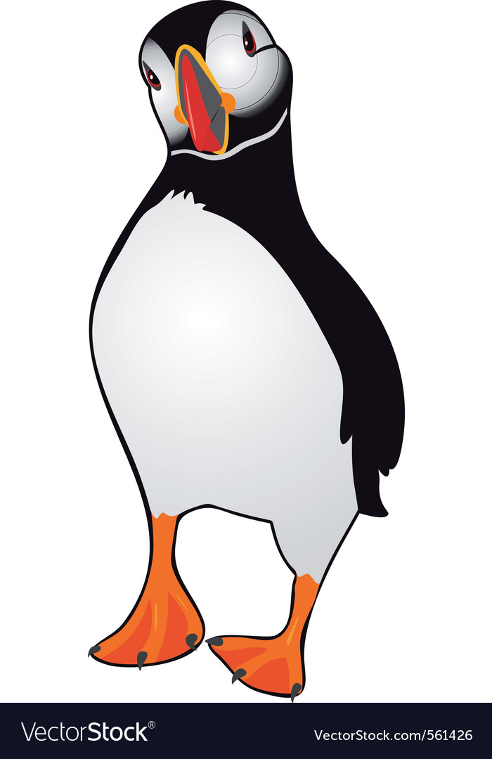 Atlantic puffin vector image