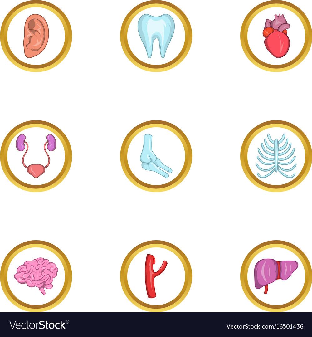 Intern organs icon set cartoon style vector image