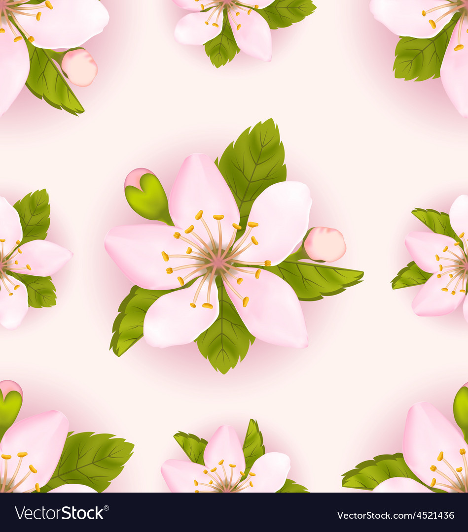 Seamless pattern with cherry flowers repeating