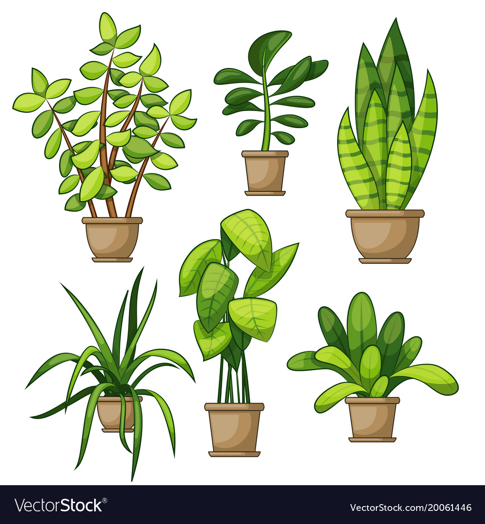Set Of Different House Plants Royalty Free Vector Image