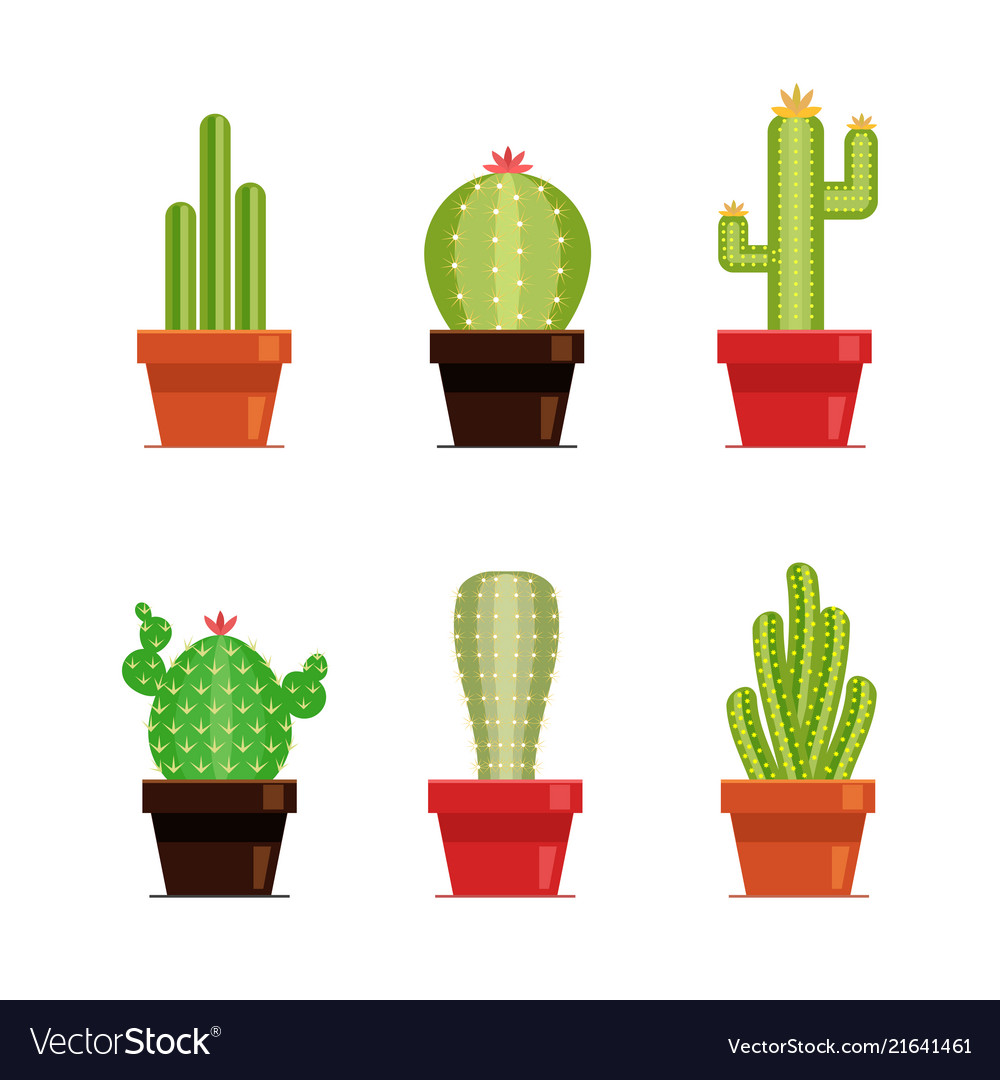 Decorative cactus set with prickles on the white