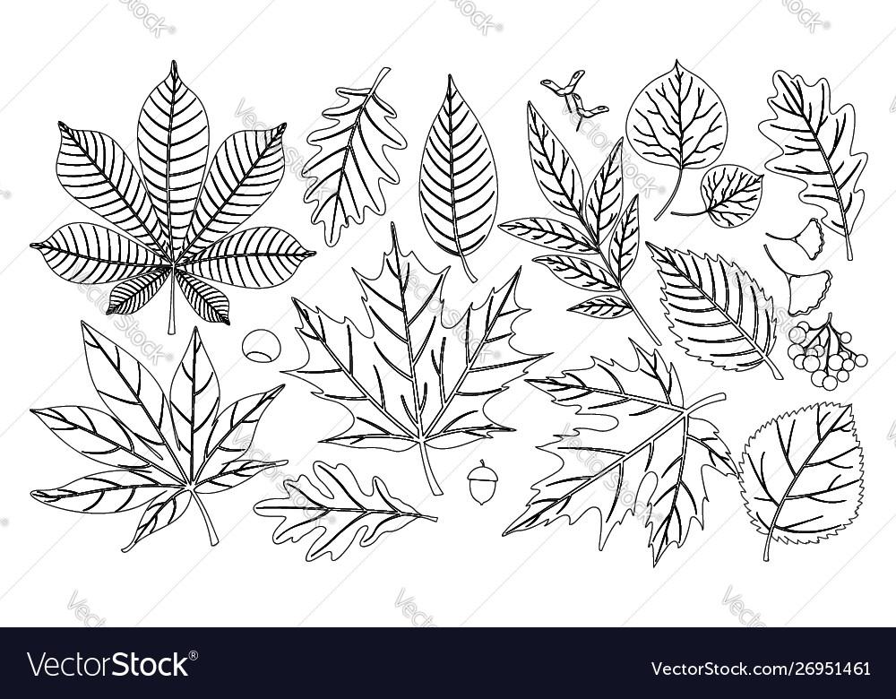 Hand drawn autumn fall leaves