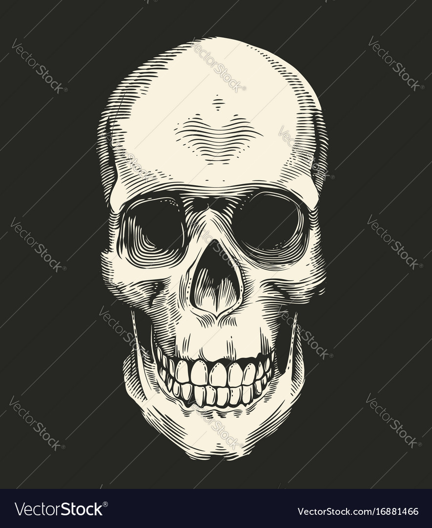 Human skull drawn in retro etching style isolated