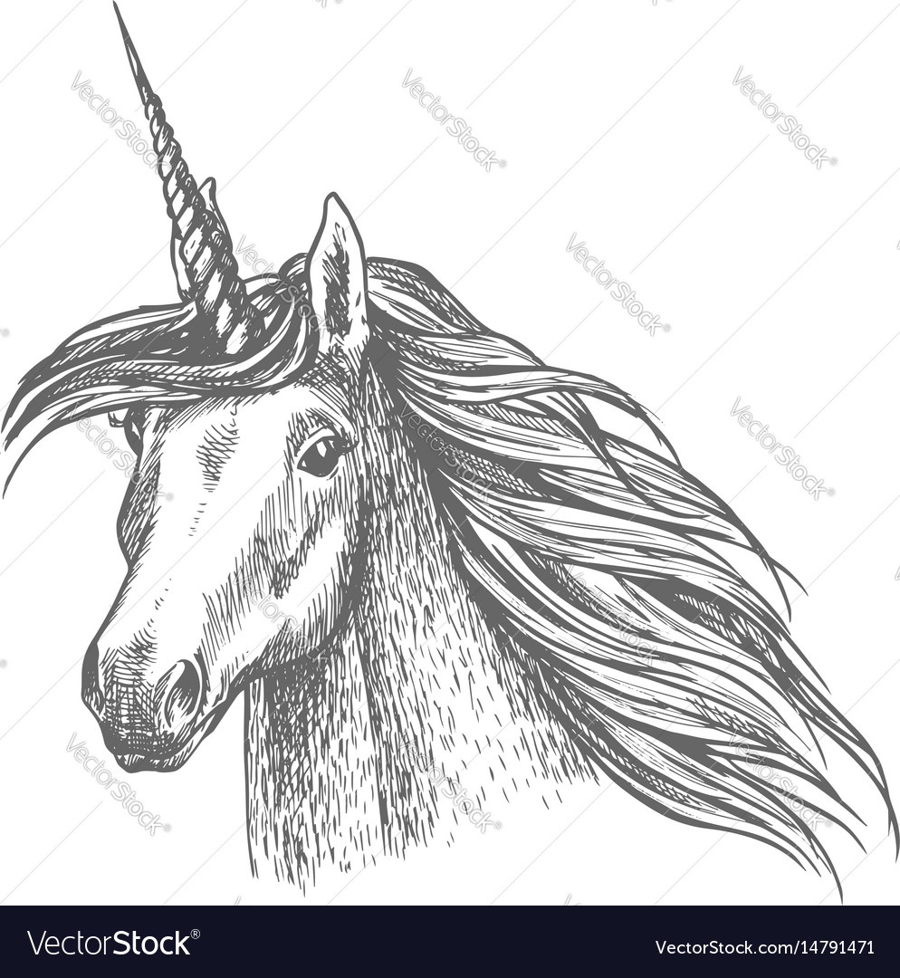 Unicorn Magic Horse Head Sketch Royalty Free Vector Image