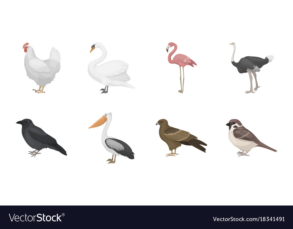 Types of birds icons in set collection for design