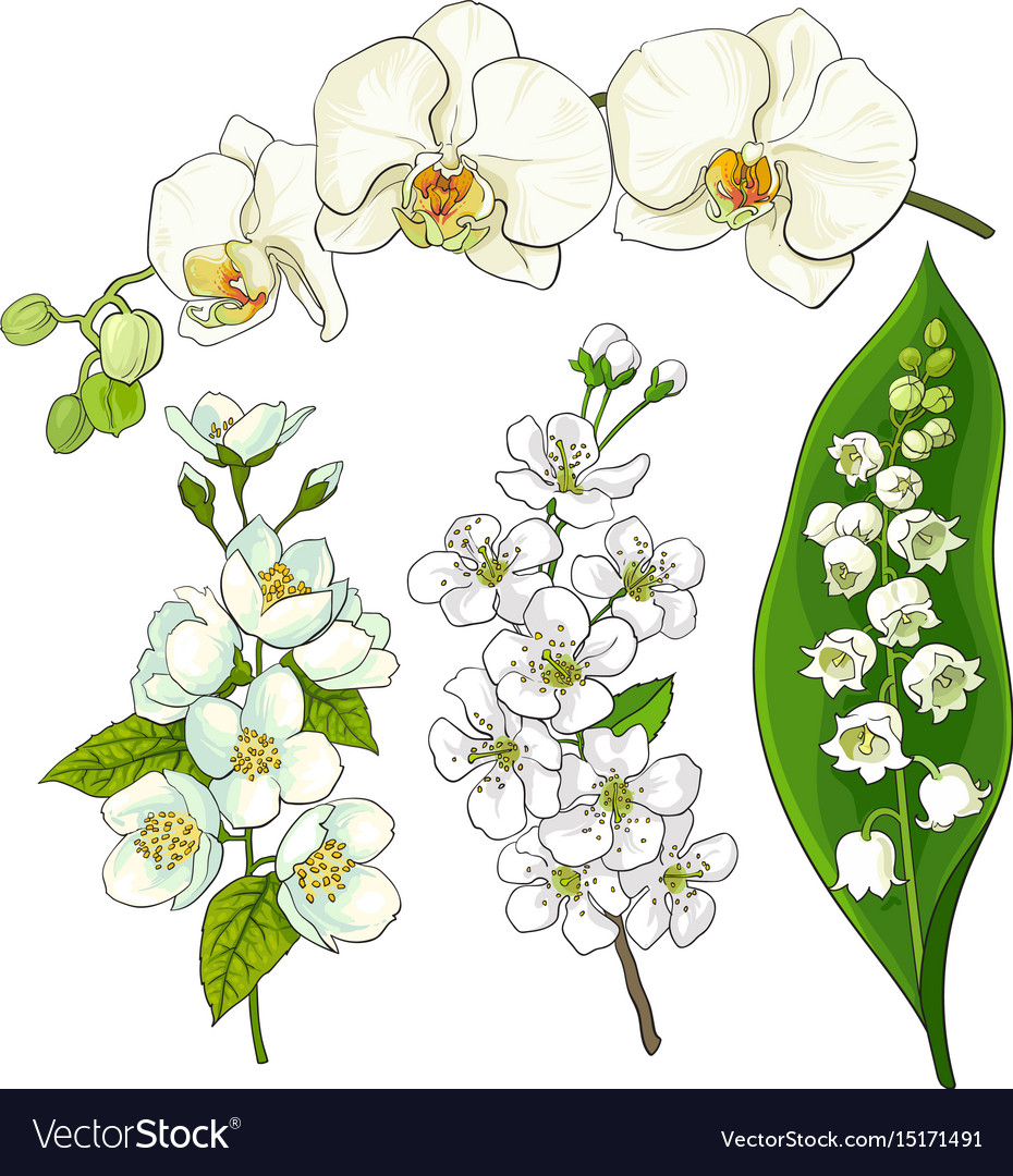 White Flowers Lily Of The Valley Orchid Apple Vector Image