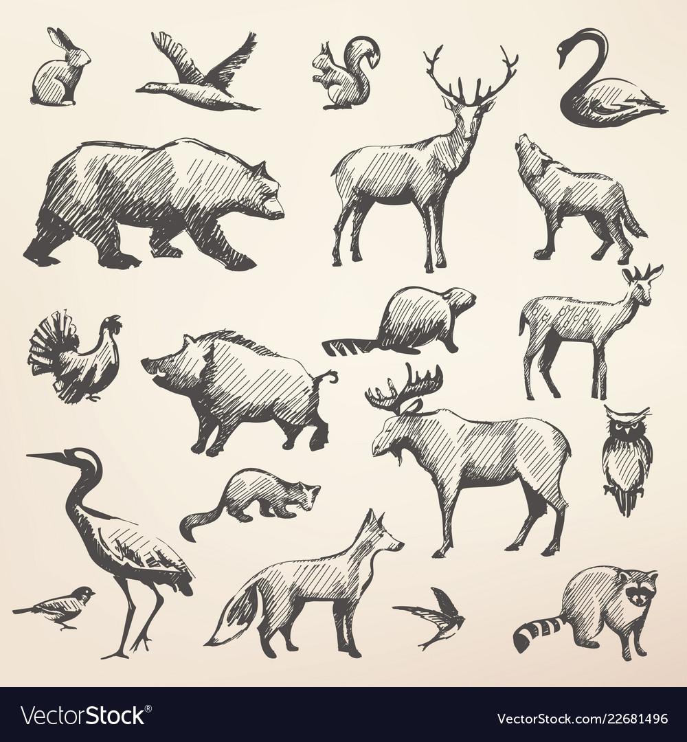 European forrest wild animals collection of
