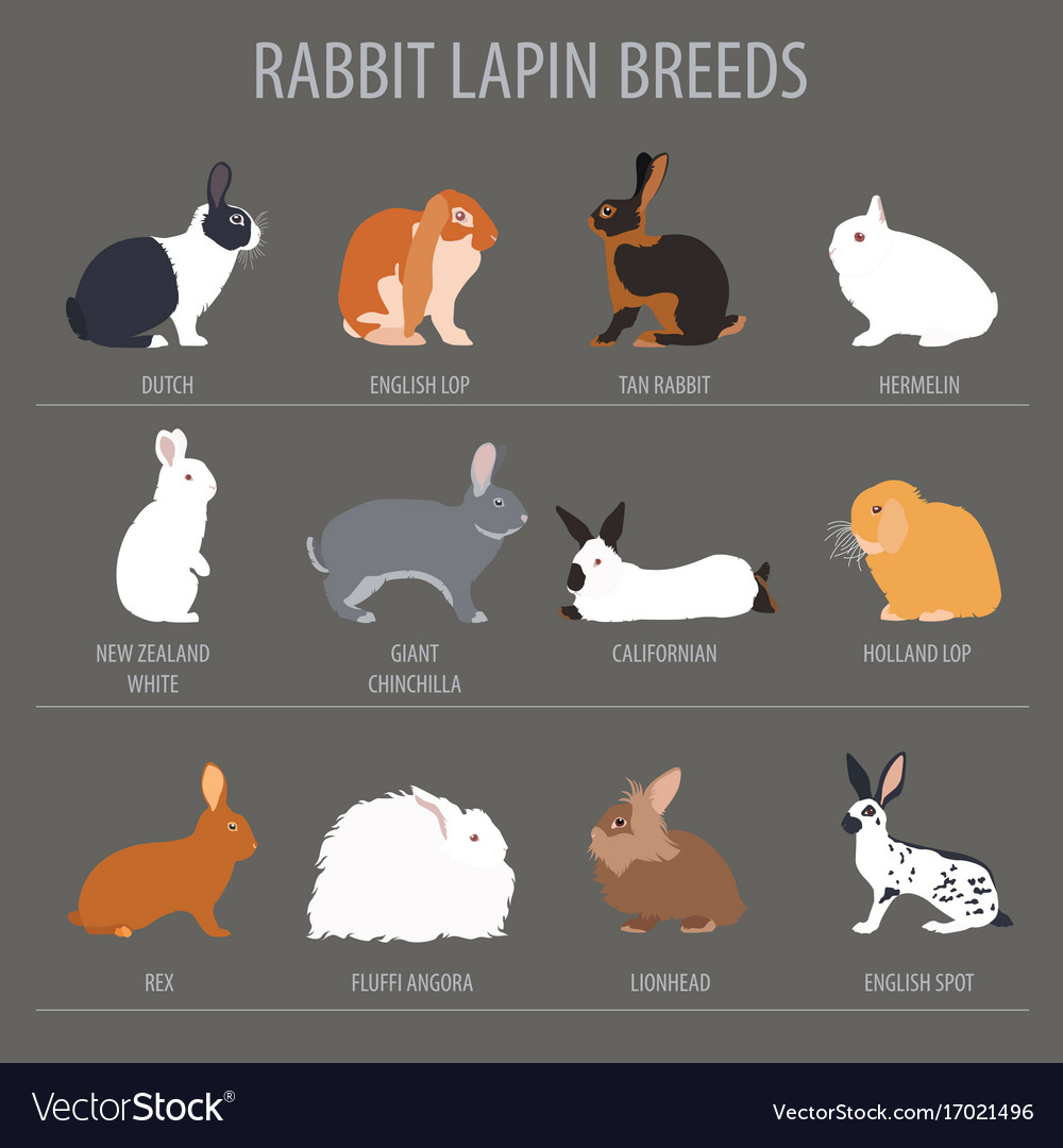 Rabbit Lapin Breed Icon Set Flat Design