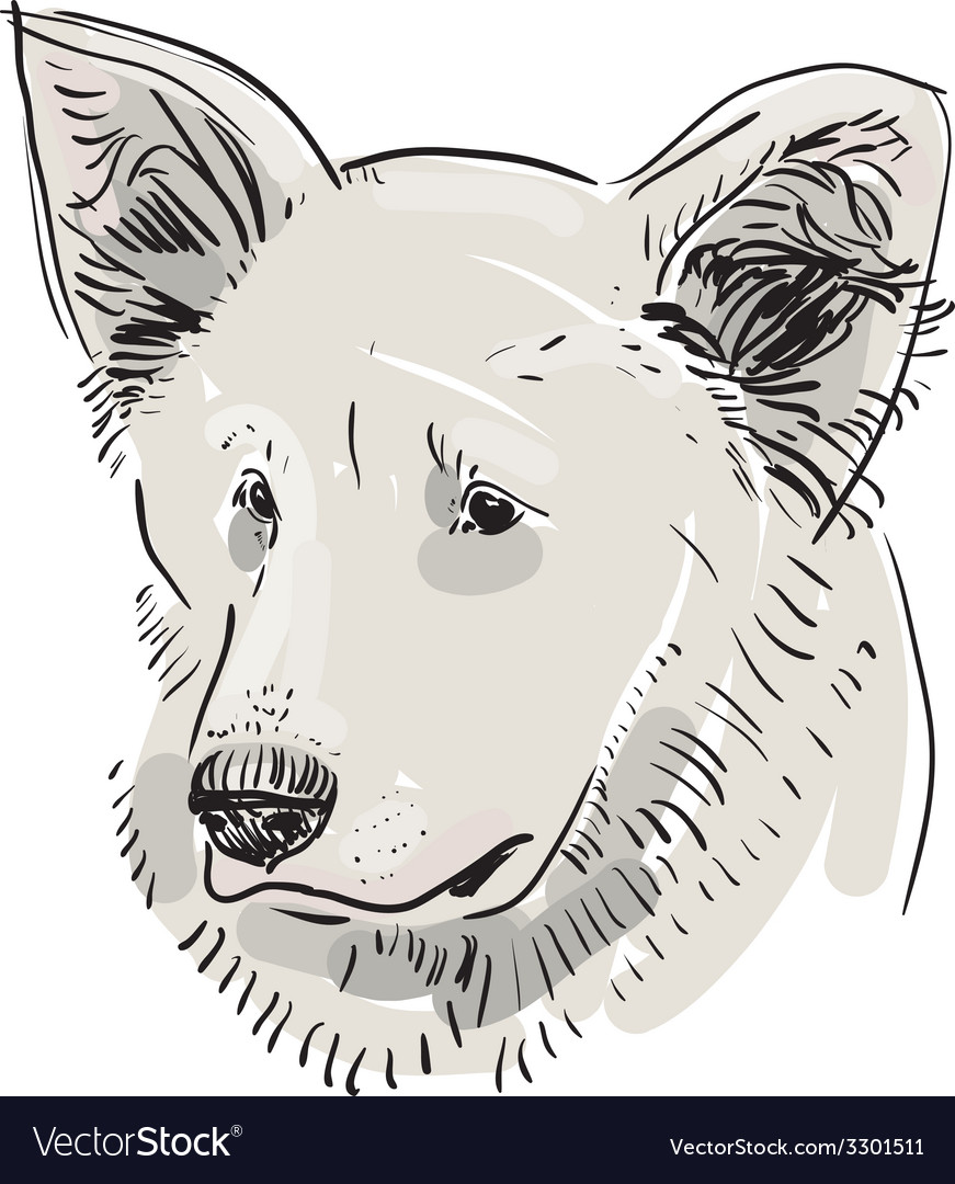 Head muzzle the dog Shepherd Sketch drawing Black