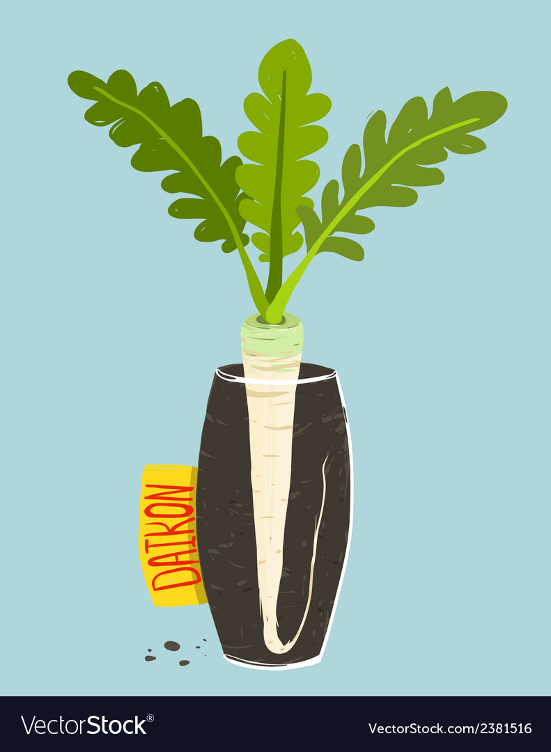 Growing Daikon Radish With Green Leafy Top In Vase