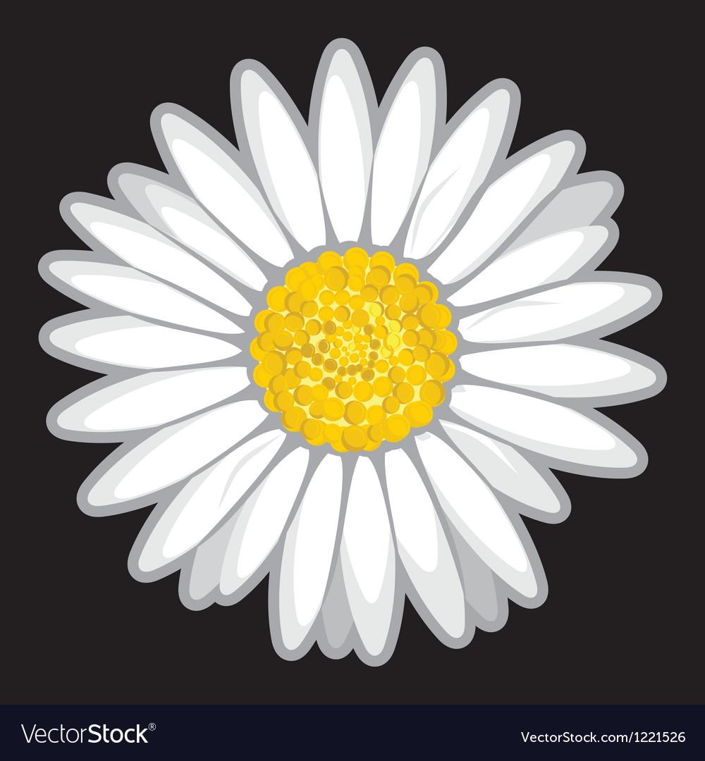 Daisy flower isolated on black vector image