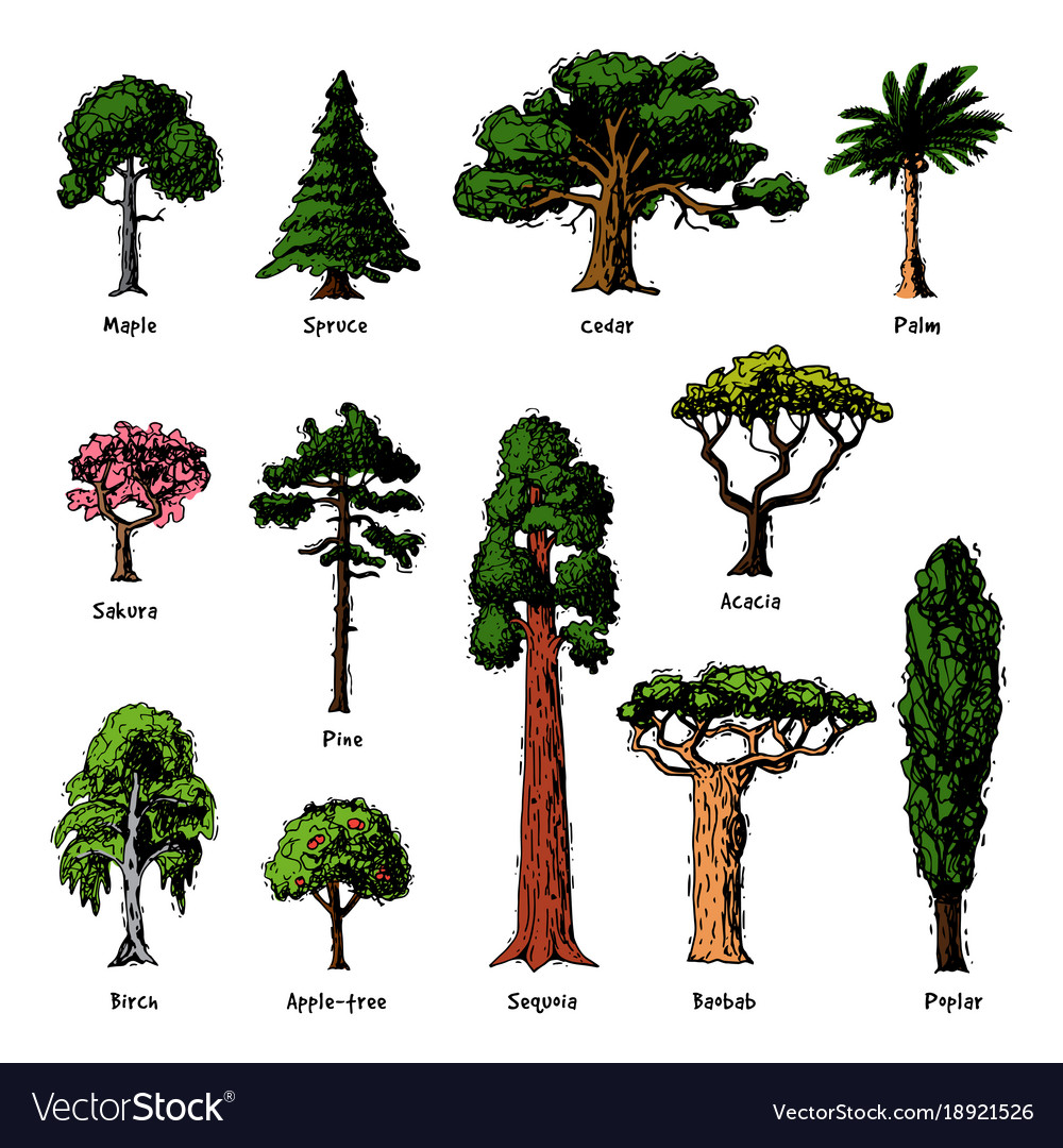 Tree types green forest pine treetops Royalty Free Vector