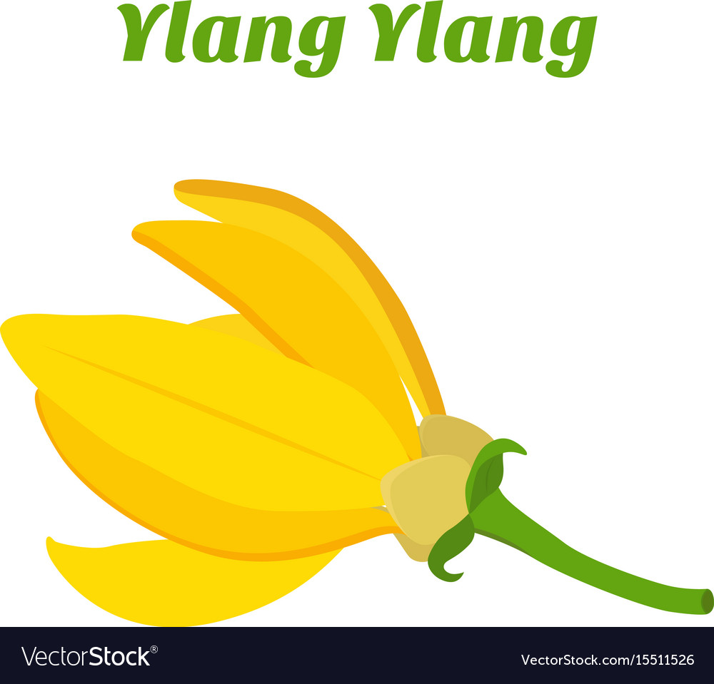 Tropical flower - ylang-ylang cananga vector image