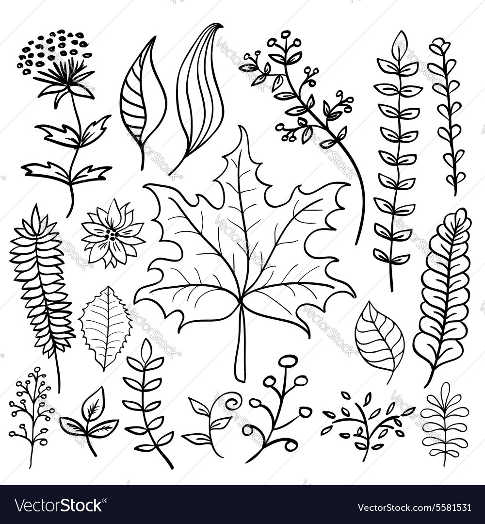 Hand Drawn Doodle Leaves Set Royalty Free Vector Image