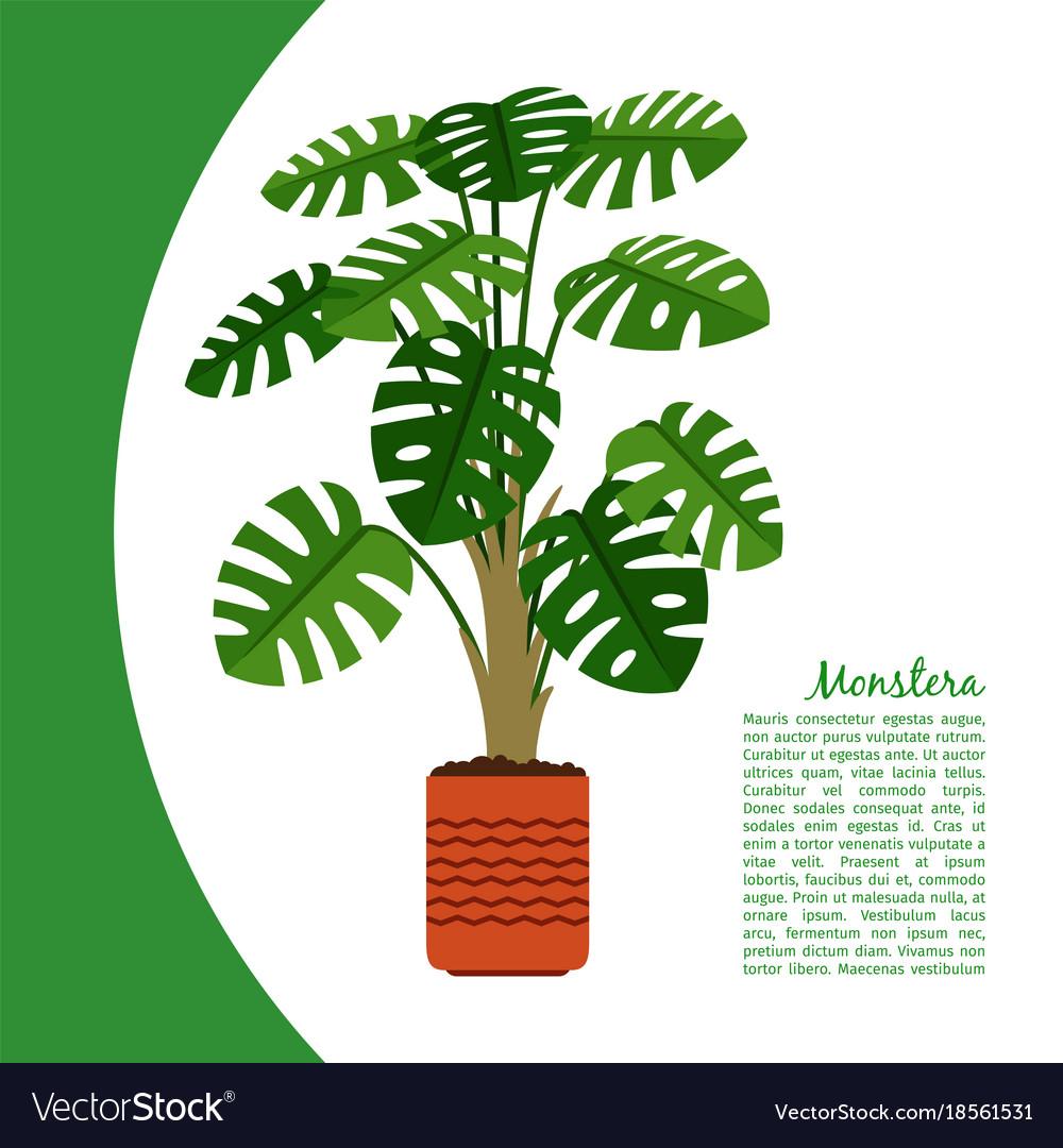 Monstera plant in pot banner