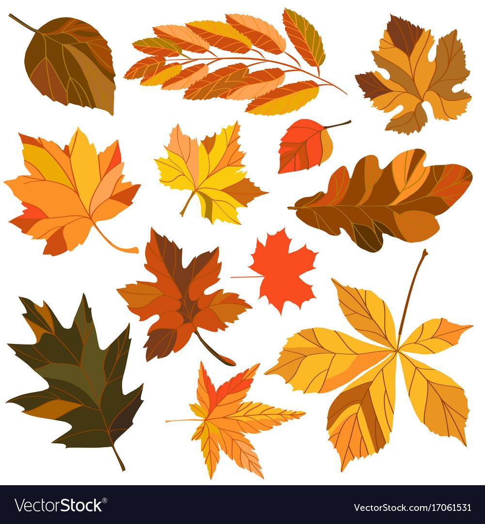 Set of autumn leaves